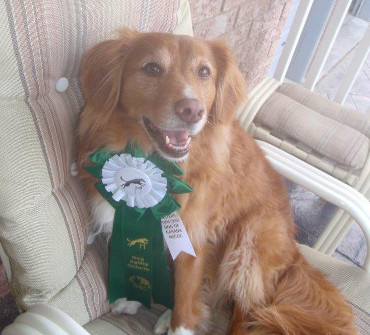 Chloe and her Masters Steeplechase ribbon