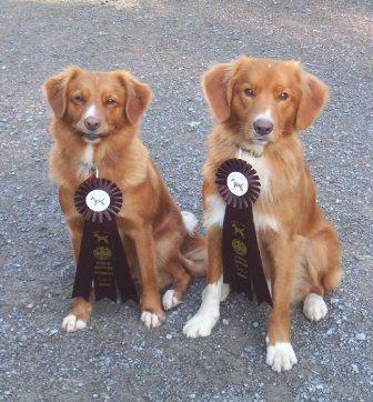 Remi (WCI) and Tam (WC) ribbons